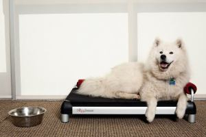 Samoyed enjoying the DoggySnooze snoozeLounge